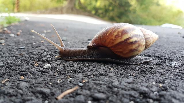 snail-2383080_640.jpg