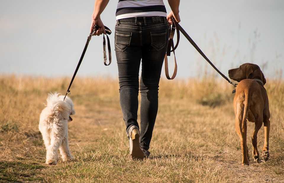 become a dog walker.
