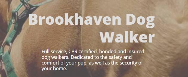 start making money as a dog walker