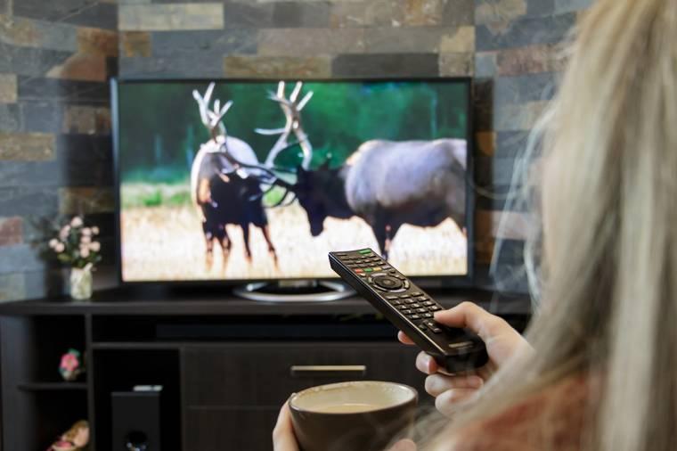 Digital media player roku vs firestick
