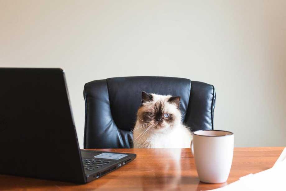 cat boarding business